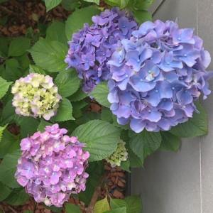 【梅雨の楽しみ|守山区志段味美容室ツムギヘアー】